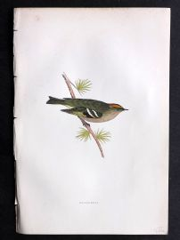 Morris 1897 Antique Hand Col Bird Print. Goldcrest